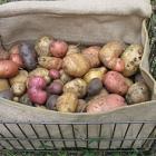Quelle patate pour ma purée?